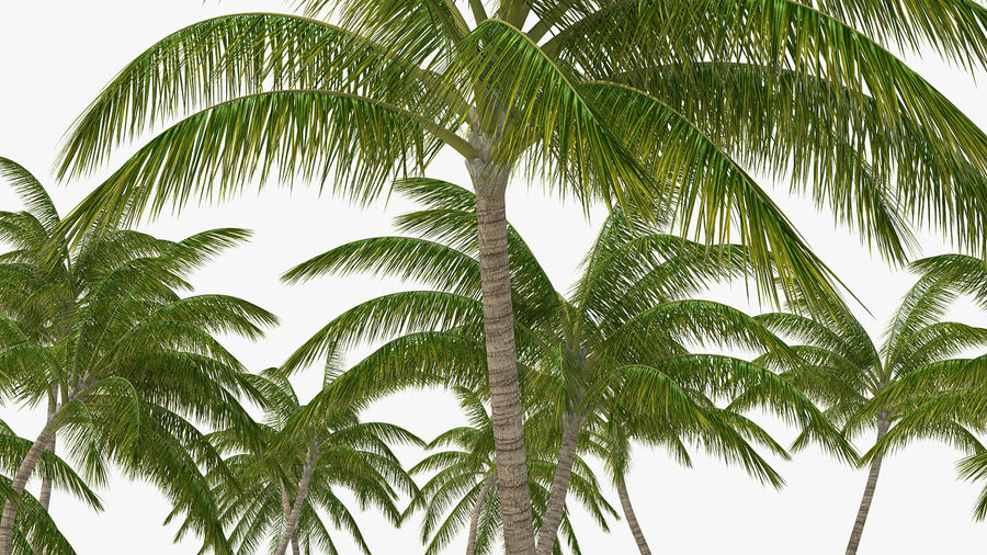 Tropical Island with Palm Trees royalty-free 3d model - Preview no. 10
