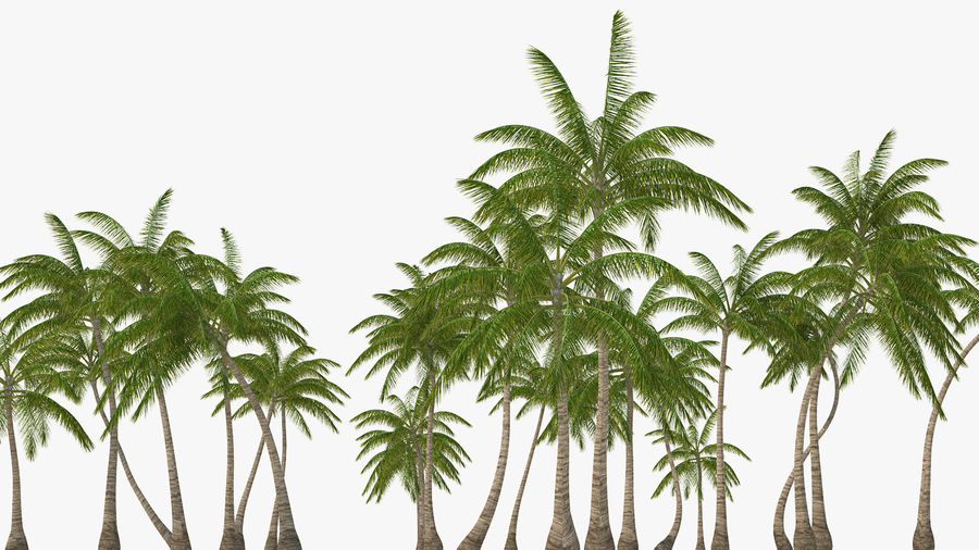 Tropical Island with Palm Trees royalty-free 3d model - Preview no. 9