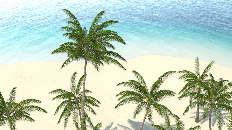 Tropical Island with Palm Trees royalty-free 3d model - Preview no. 8