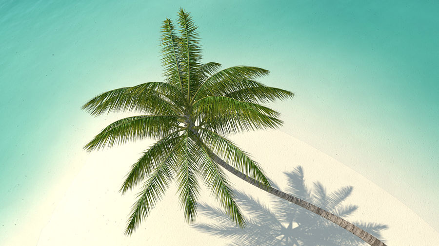 Desert Tropical Island with Palm Tree royalty-free 3d model - Preview no. 7