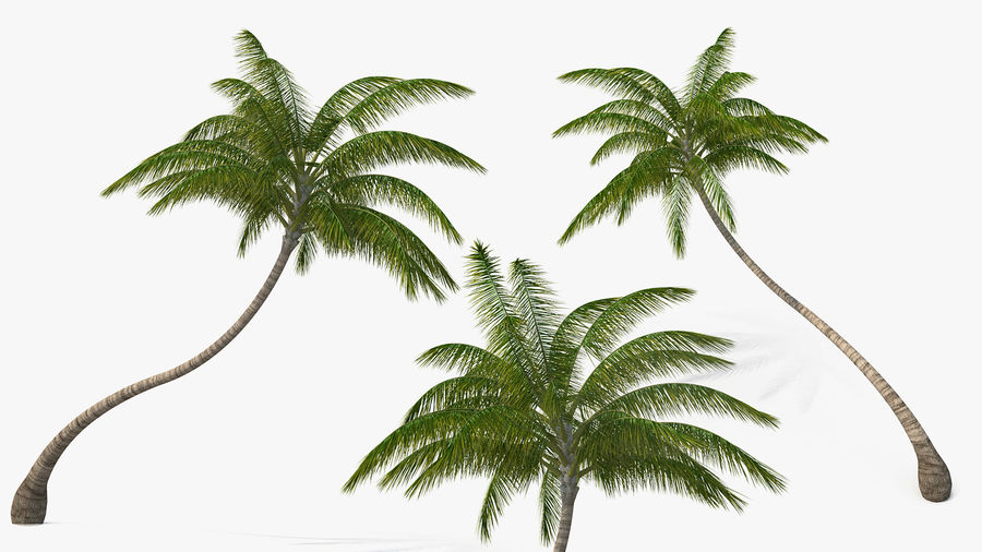 Desert Tropical Island with Palm Tree royalty-free 3d model - Preview no. 10