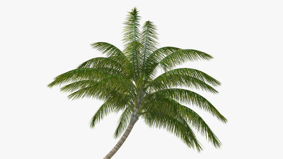 Desert Tropical Island with Palm Tree royalty-free 3d model - Preview no. 9