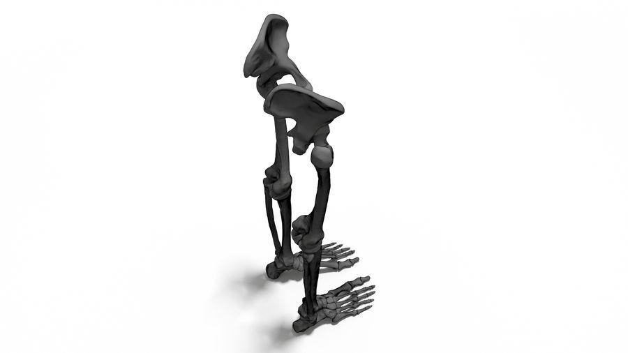 Leg Skeleton royalty-free 3d model - Preview no. 7