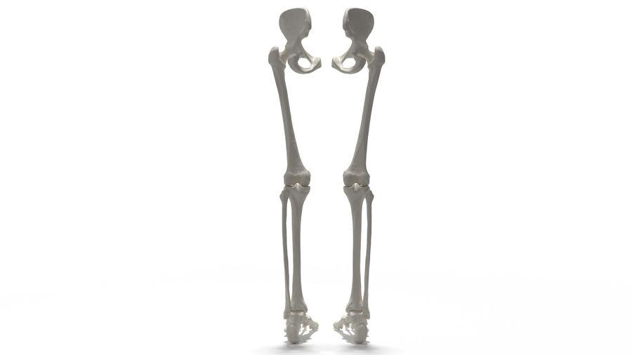 Leg Skeleton royalty-free 3d model - Preview no. 18