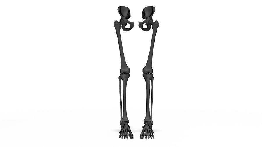 Leg Skeleton royalty-free 3d model - Preview no. 17