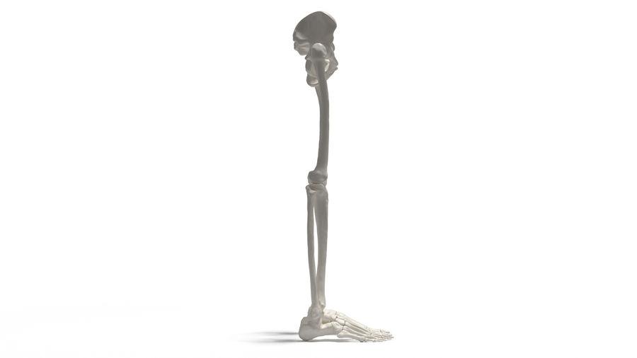 Leg Skeleton royalty-free 3d model - Preview no. 14