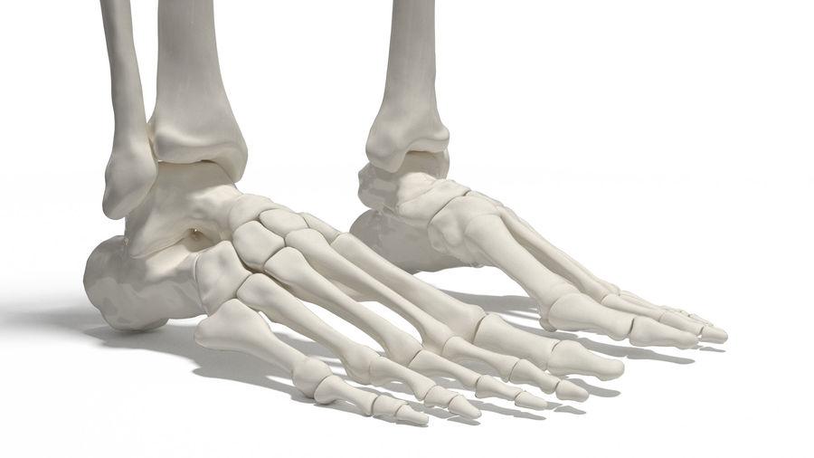 Leg Skeleton royalty-free 3d model - Preview no. 4