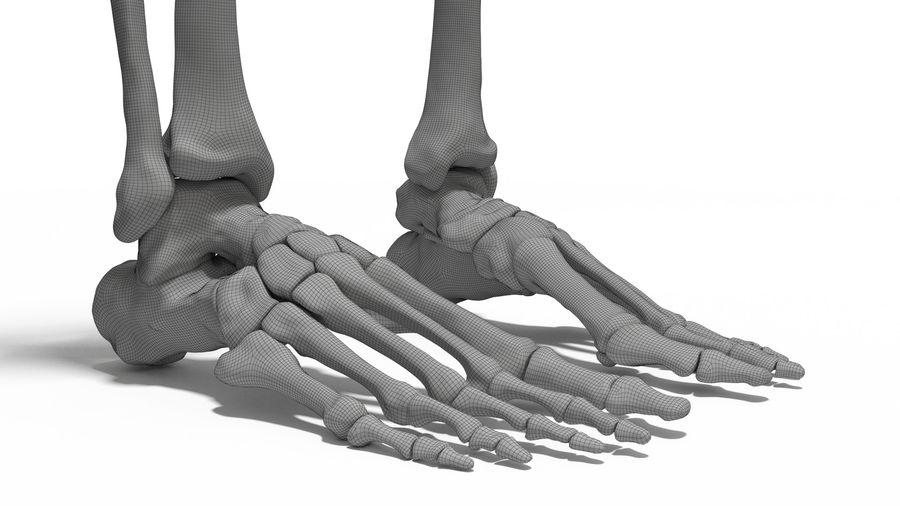 Leg Skeleton royalty-free 3d model - Preview no. 5