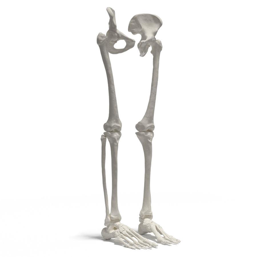 Leg Skeleton royalty-free 3d model - Preview no. 1