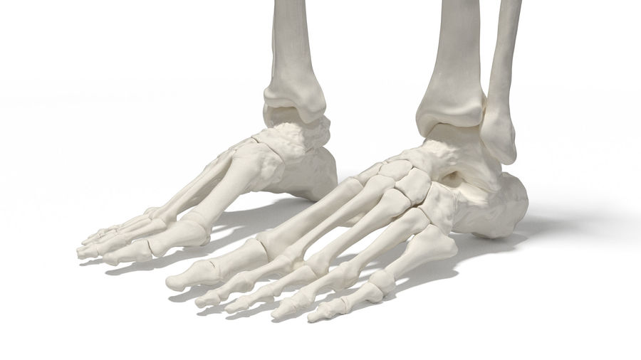 Leg Skeleton royalty-free 3d model - Preview no. 3