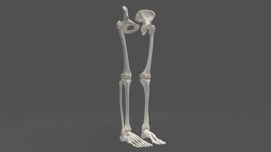 Leg Skeleton royalty-free 3d model - Preview no. 2