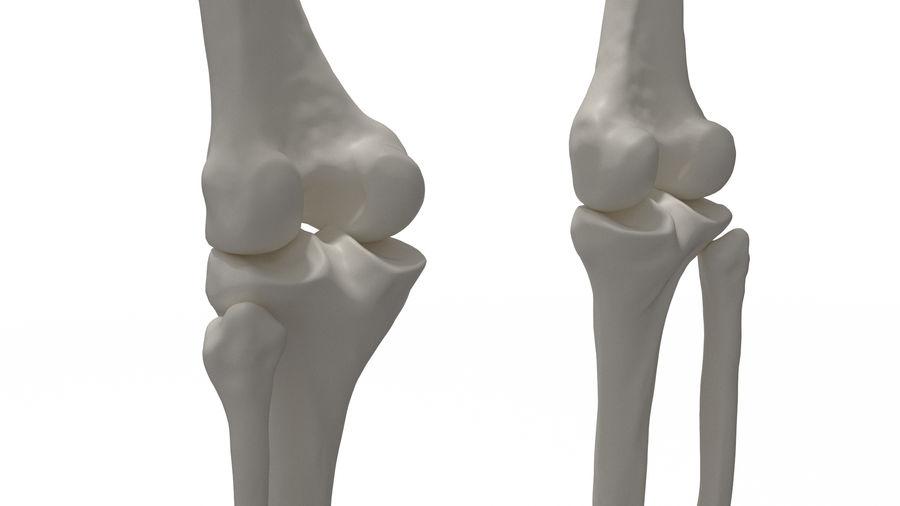 Leg Skeleton royalty-free 3d model - Preview no. 8