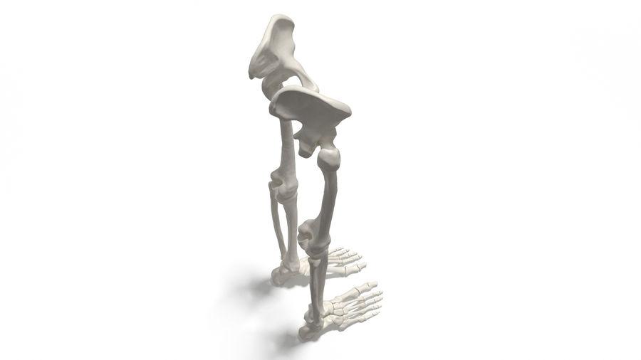 Leg Skeleton royalty-free 3d model - Preview no. 6