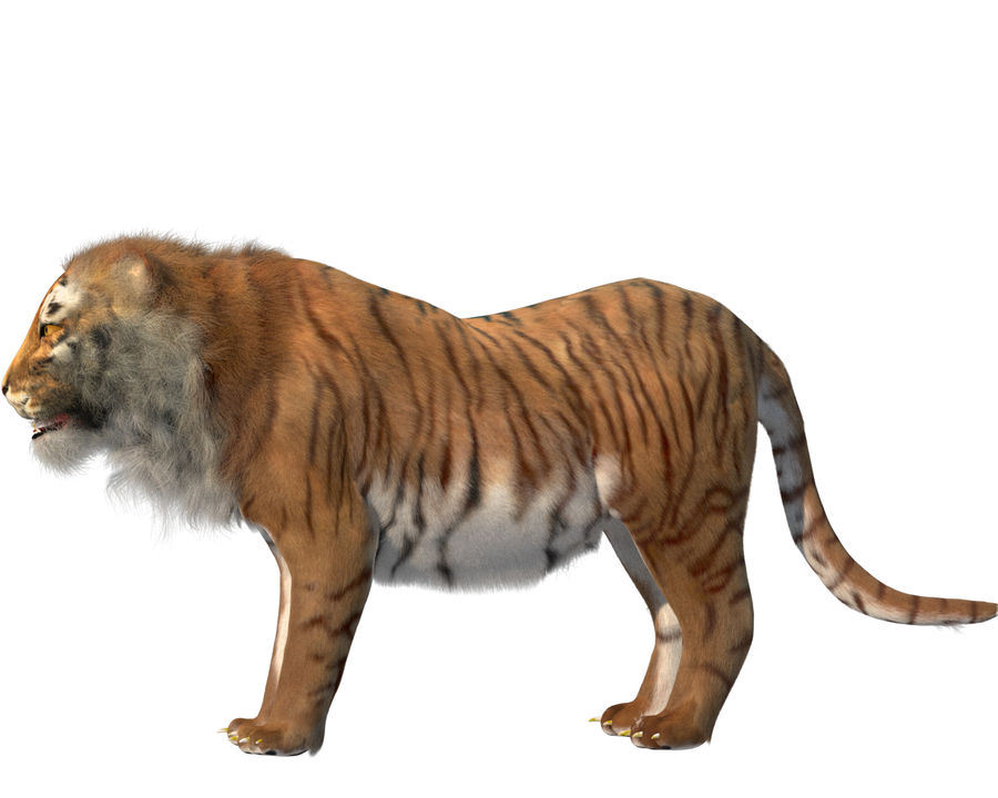 Tiger royalty-free 3d model - Preview no. 2