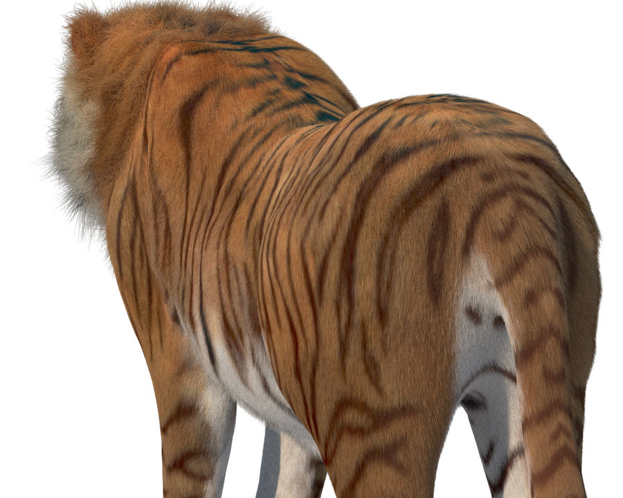 Tiger royalty-free 3d model - Preview no. 5