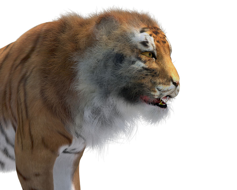 Tiger royalty-free 3d model - Preview no. 1