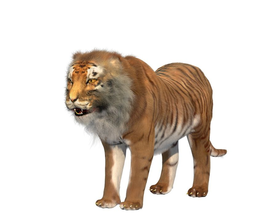 Tiger royalty-free 3d model - Preview no. 4