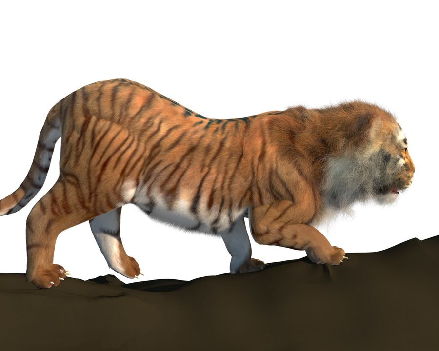 Tiger royalty-free 3d model - Preview no. 3