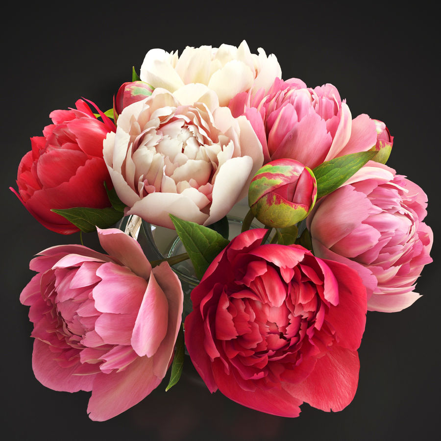 Flowers Peonies 3D model royalty-free 3d model - Preview no. 2