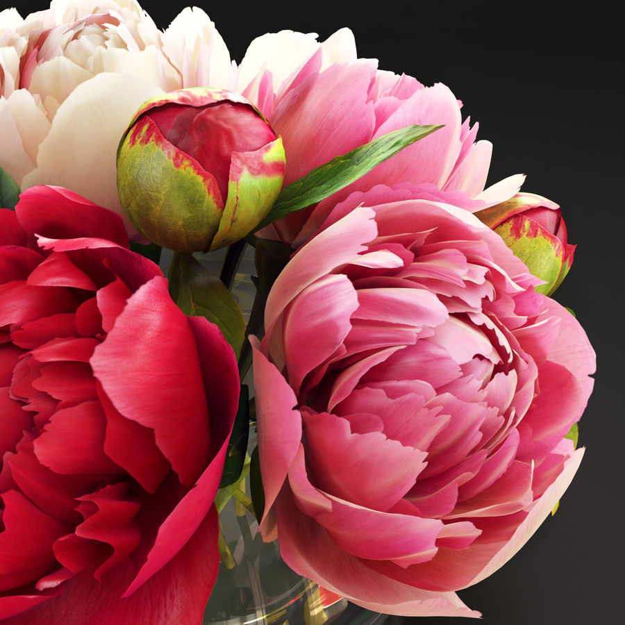 Flowers Peonies 3D model royalty-free 3d model - Preview no. 3