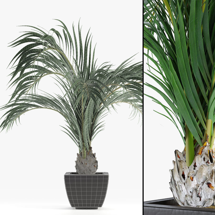 Realistic Palm Garden royalty-free 3d model - Preview no. 4