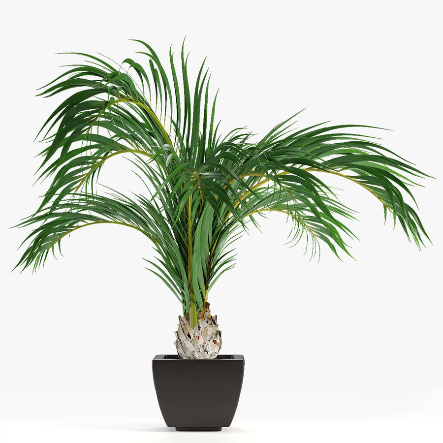 Realistic Palm Garden royalty-free 3d model - Preview no. 1