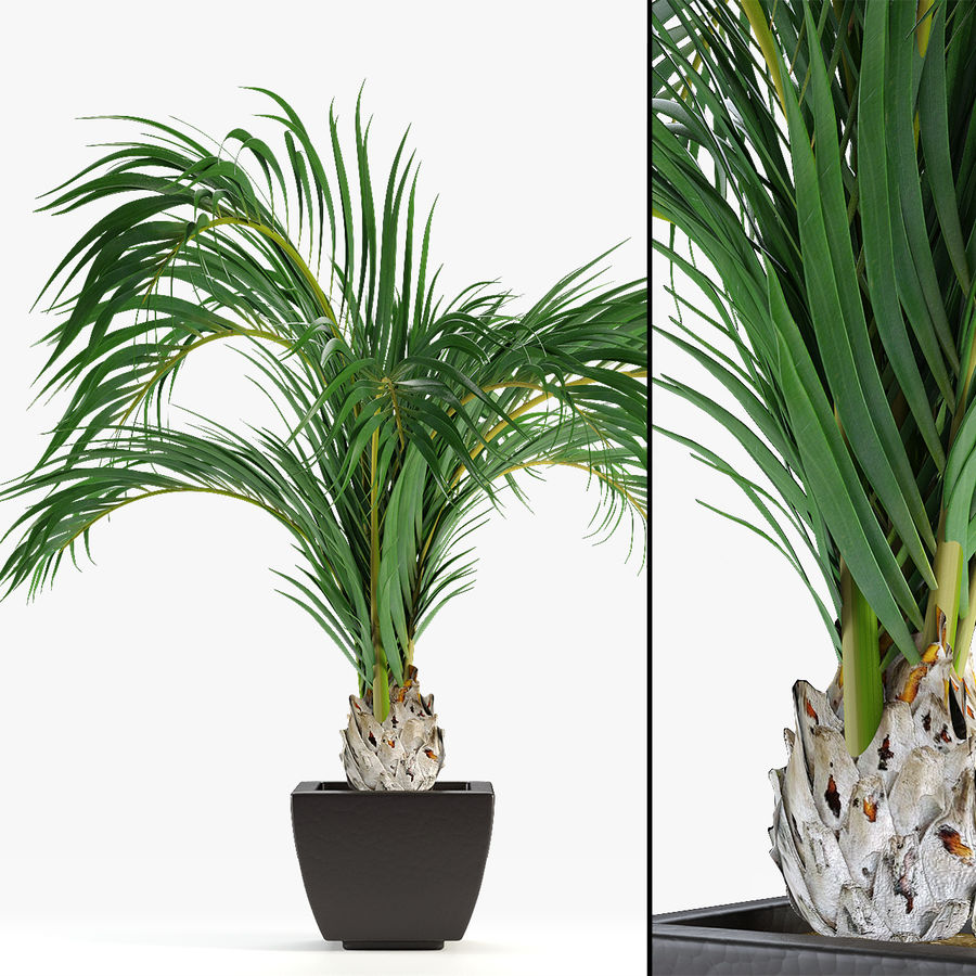 Realistic Palm Garden royalty-free 3d model - Preview no. 3