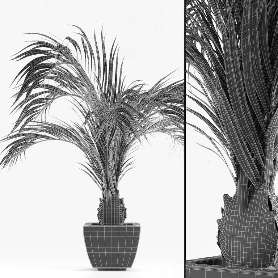 Realistic Palm Garden royalty-free 3d model - Preview no. 5