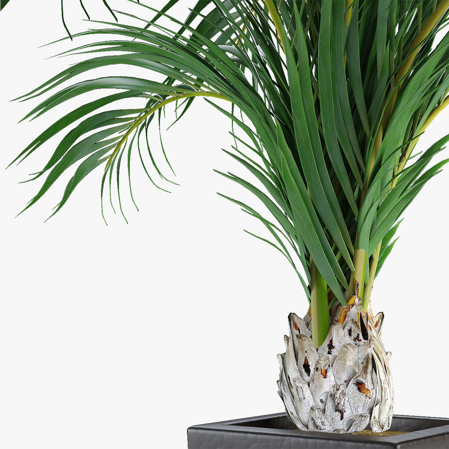 Realistic Palm Garden royalty-free 3d model - Preview no. 2