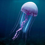 Animated Jellyfish 1 3d model