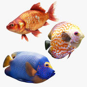 Tropic Fish Collection 1 3d model