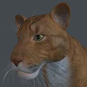 LION-009 3d model