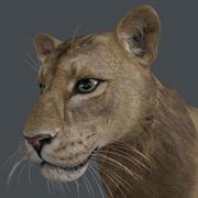LION-012 3d model
