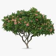 Плюмерия Франгипани Дерево Розовые Цветы 3d model
