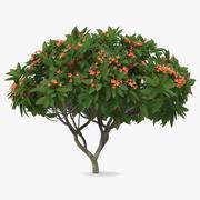Плюмерия Франгипани Дерево Красные Цветы 3d model