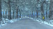 Winter Road. 3d model