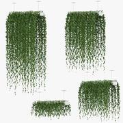 Hängande växter v1 3d model