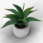 セメントポットの装飾的な植物 3d model