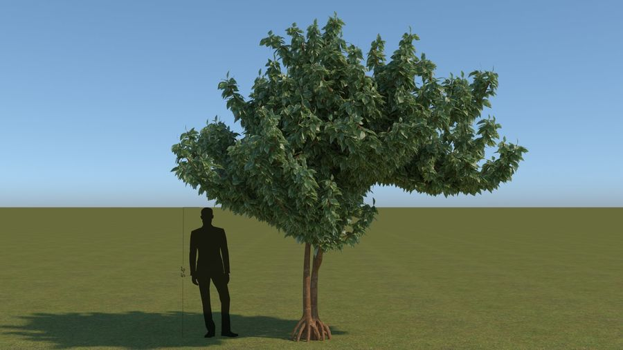 64 trees plants royalty-free 3d model - Preview no. 17