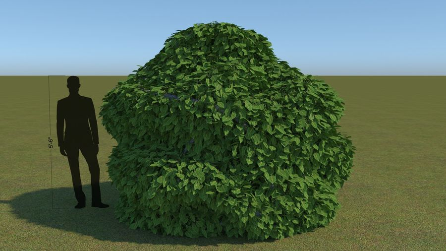 64 trees plants royalty-free 3d model - Preview no. 19