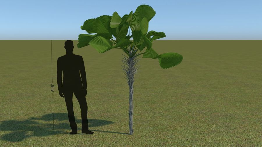 64 trees plants royalty-free 3d model - Preview no. 37