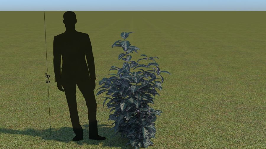 64 trees plants royalty-free 3d model - Preview no. 49