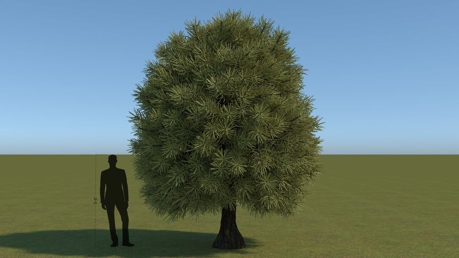 64 trees plants royalty-free 3d model - Preview no. 7