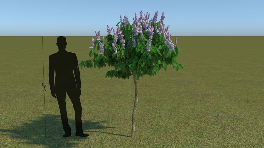 64 trees plants royalty-free 3d model - Preview no. 27