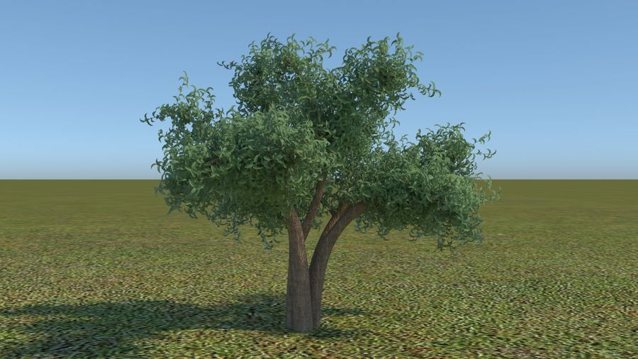 64 trees plants royalty-free 3d model - Preview no. 26