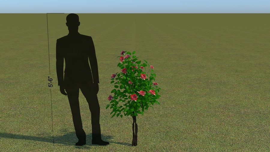 64 trees plants royalty-free 3d model - Preview no. 43