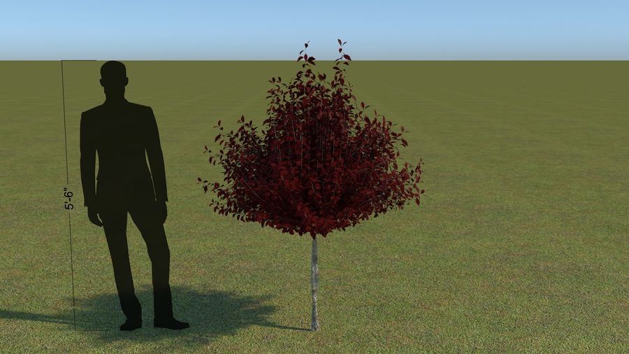64 trees plants royalty-free 3d model - Preview no. 21