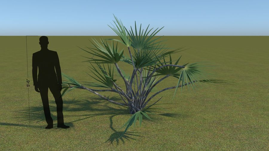 64 trees plants royalty-free 3d model - Preview no. 12