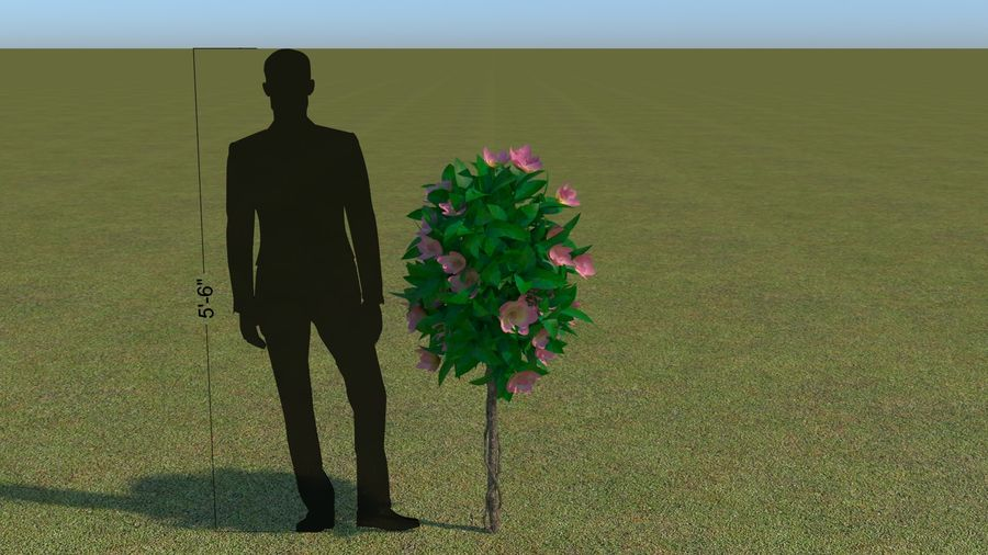 64 trees plants royalty-free 3d model - Preview no. 47