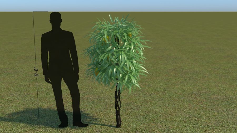 64 trees plants royalty-free 3d model - Preview no. 45